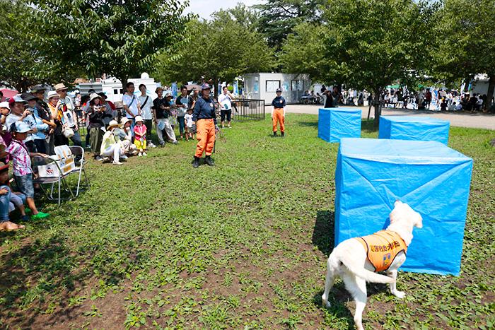災害補助犬のデモンストレーション
